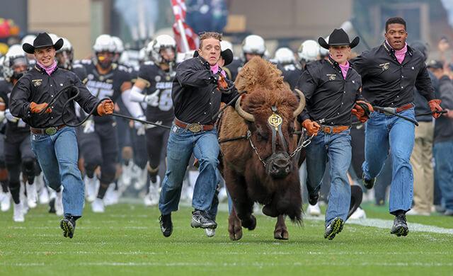 Colorado Buffaloes Ralphie entrance rivalry