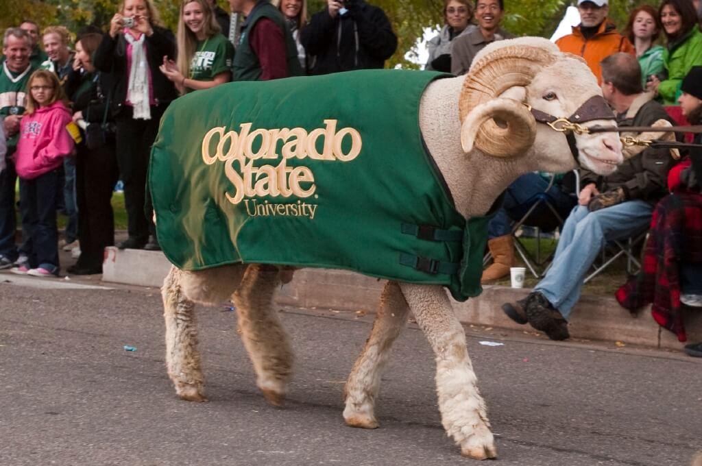 Cam the Ram Colorado State Rams live mascot