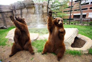 Lady Joy Baylor Bears live mascot