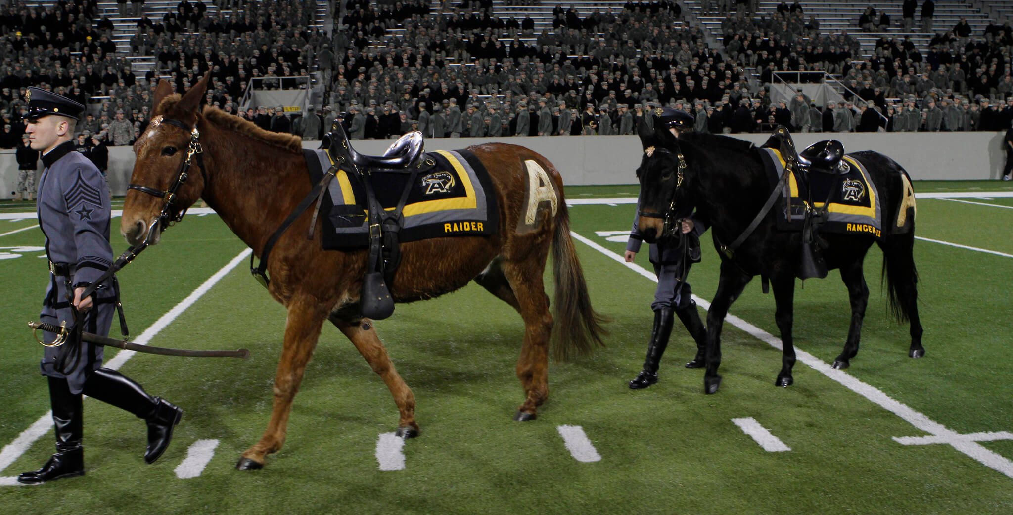 Ranger III and Stryker Army Black Knights live mascots
