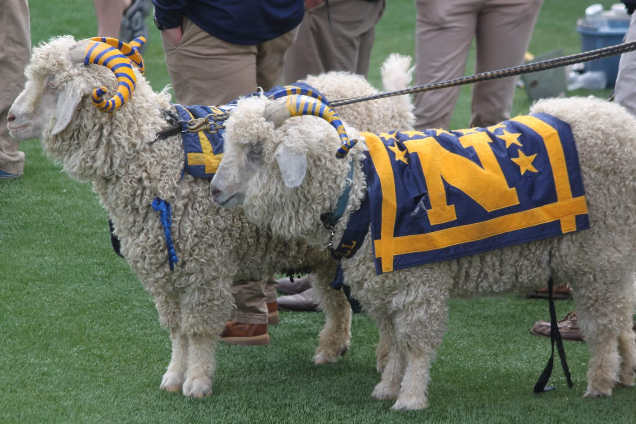 Bill the Goat Navy Midshipmen live mascot